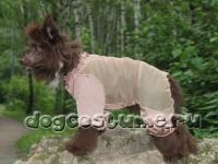 китайская хохлатая собака Бэри