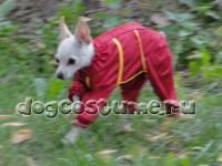Модель Зося, русский той, сезон весна - осень, цвет ткани - красный