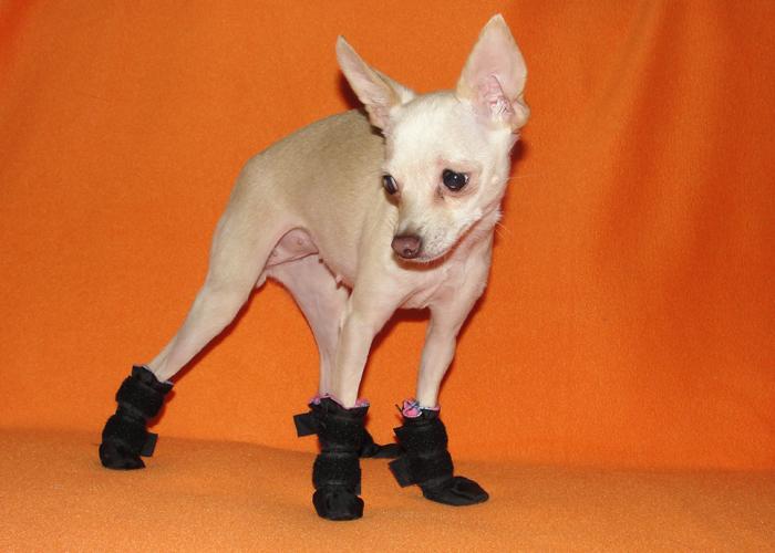 Алиэкспресс обувь для собак той терьер